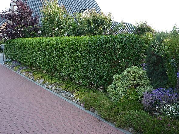 Heckenpflanzen bieten Schutz vor neugierigen Blicken