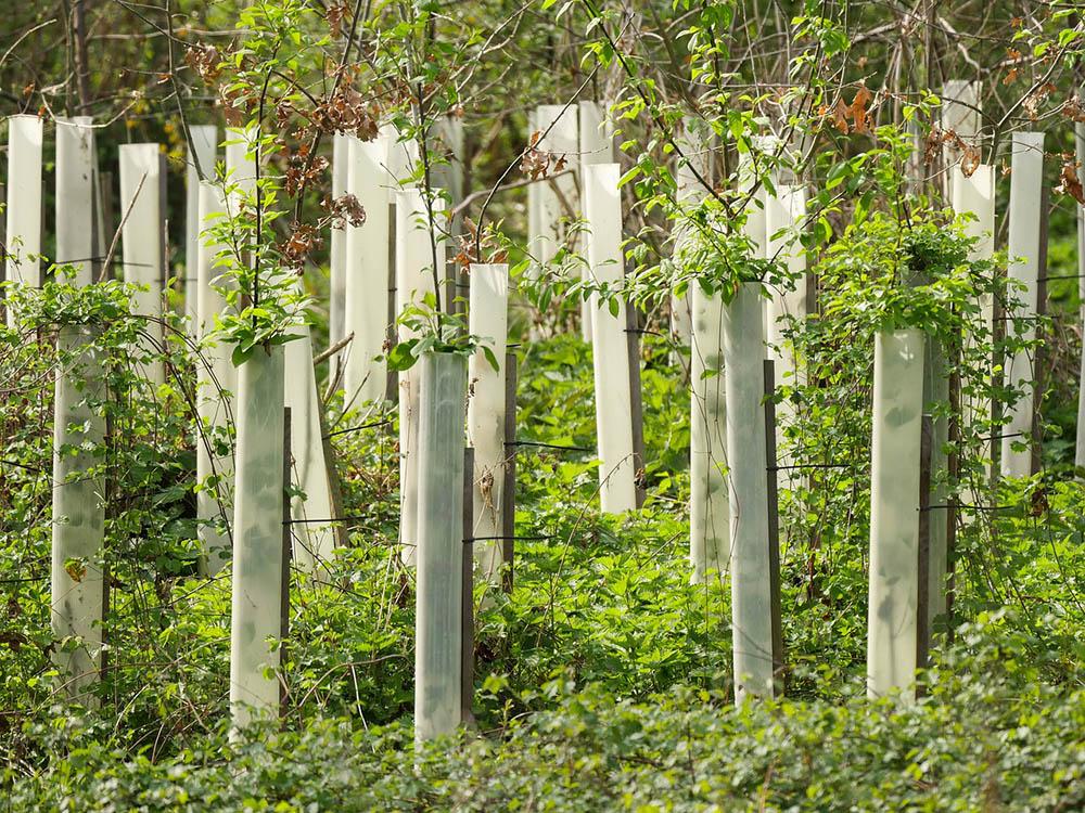 Bäume in einer Baumschule
