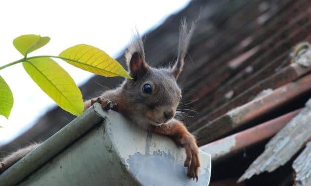 Erleichterung bei der Dachrinnenreinigung und Laub wirksam vorbeugen