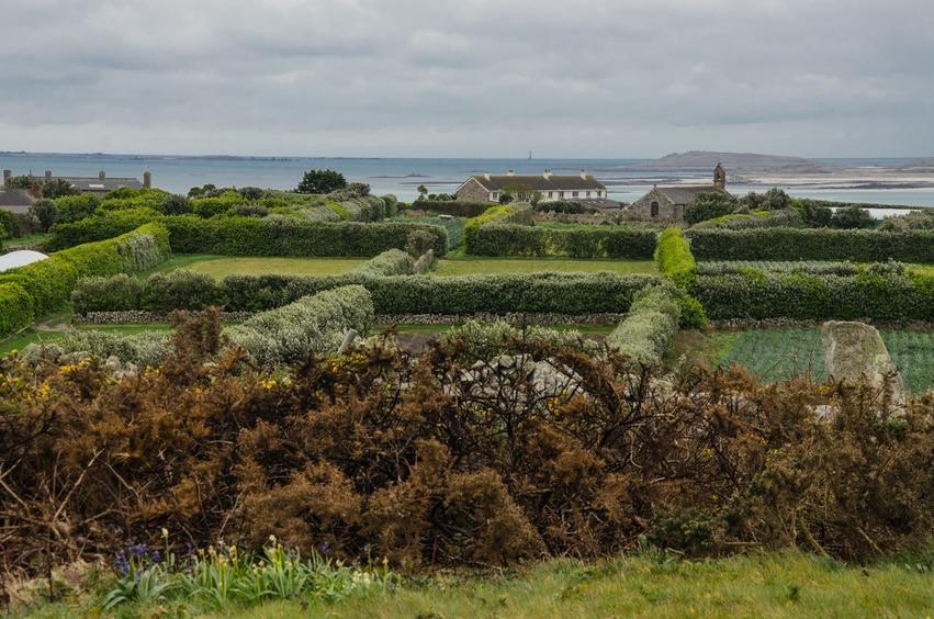 Heckenlandschaft - Wirkungsvoller Windschutz am Meer