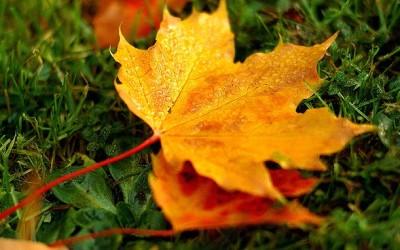 Der Herbst ist da – Zeit für Gemütlichkeit