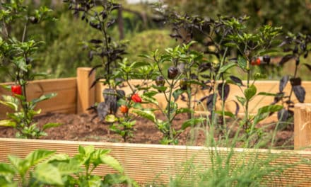 Hochbeet: Das ist bei der Bepflanzung und Pflege zu beachten
