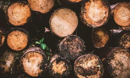 Gute Gründe zum Wohnen im Holzwohnhaus