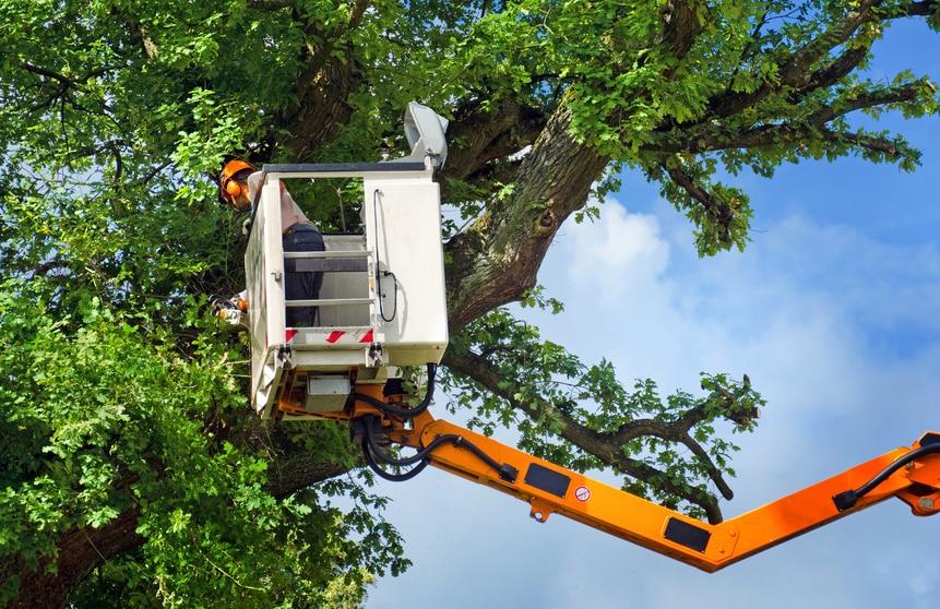 Arbeiter bei Baumrückschnitt mit Arbeitsbühne