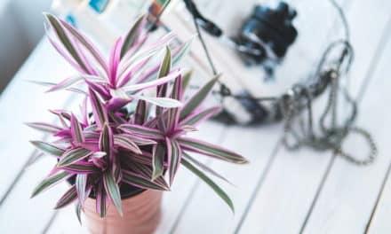 Das grüne Paradies – Zimmerpflanzen zur Dekoration