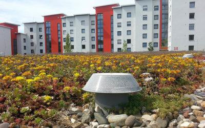 Carport mit Dachbegrünung bauen – Tipps für die Planung, Finanzierung und Umsetzung